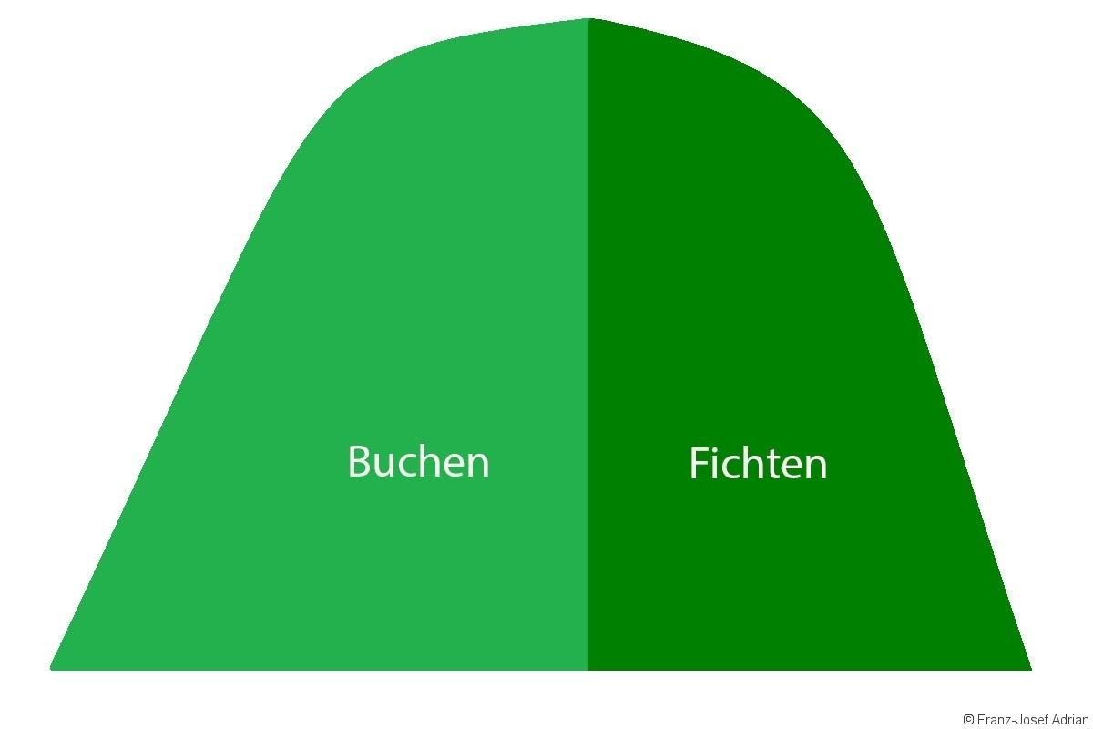 Buchen_Fichten_Abituraufgabe