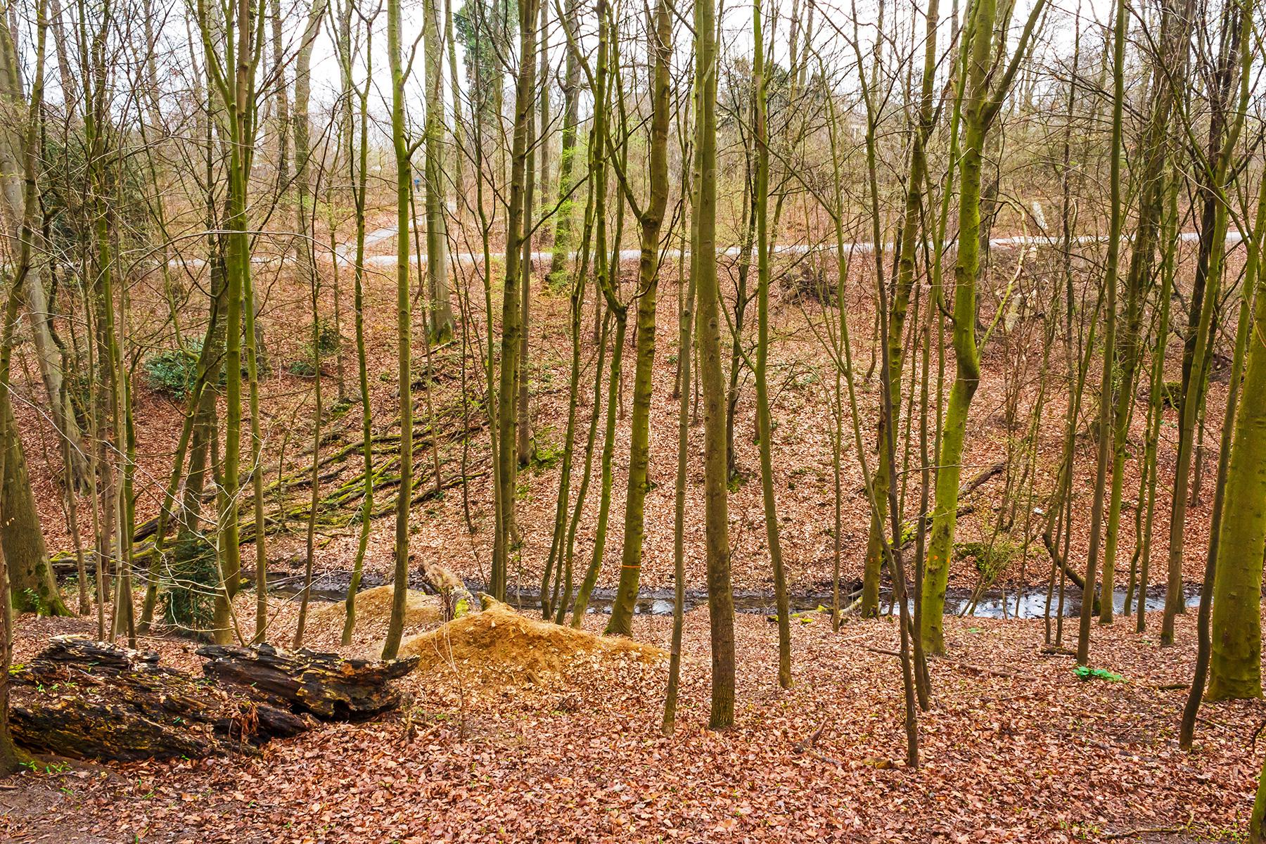 steriler, am Reißbrett geplanter Holzacker