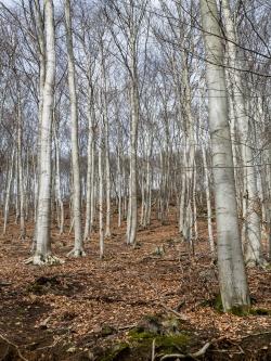Altersklassenwald am Ramsnacken