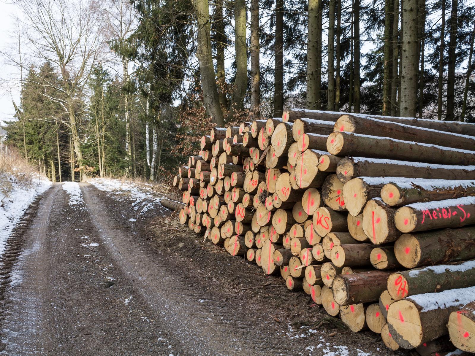 Dutzende Festmeter Fichtenholz