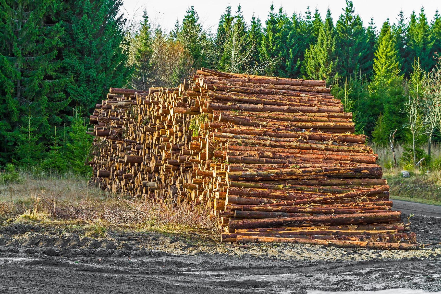 Holzpolter an der Rangerstation Scharfenstein