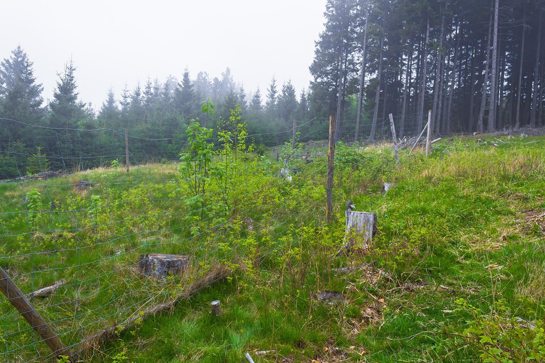 Laubbäume hinter Wildschutzzaun nahe Ernstburg