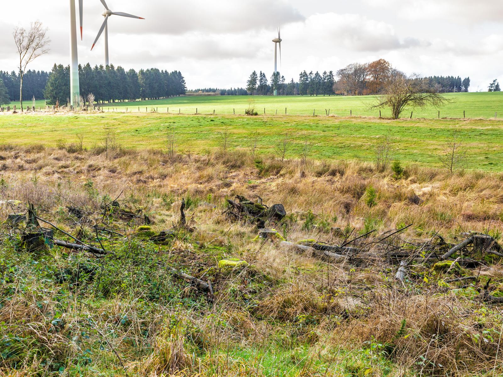 herausgerissener Wurzelteller und degradierter Boden