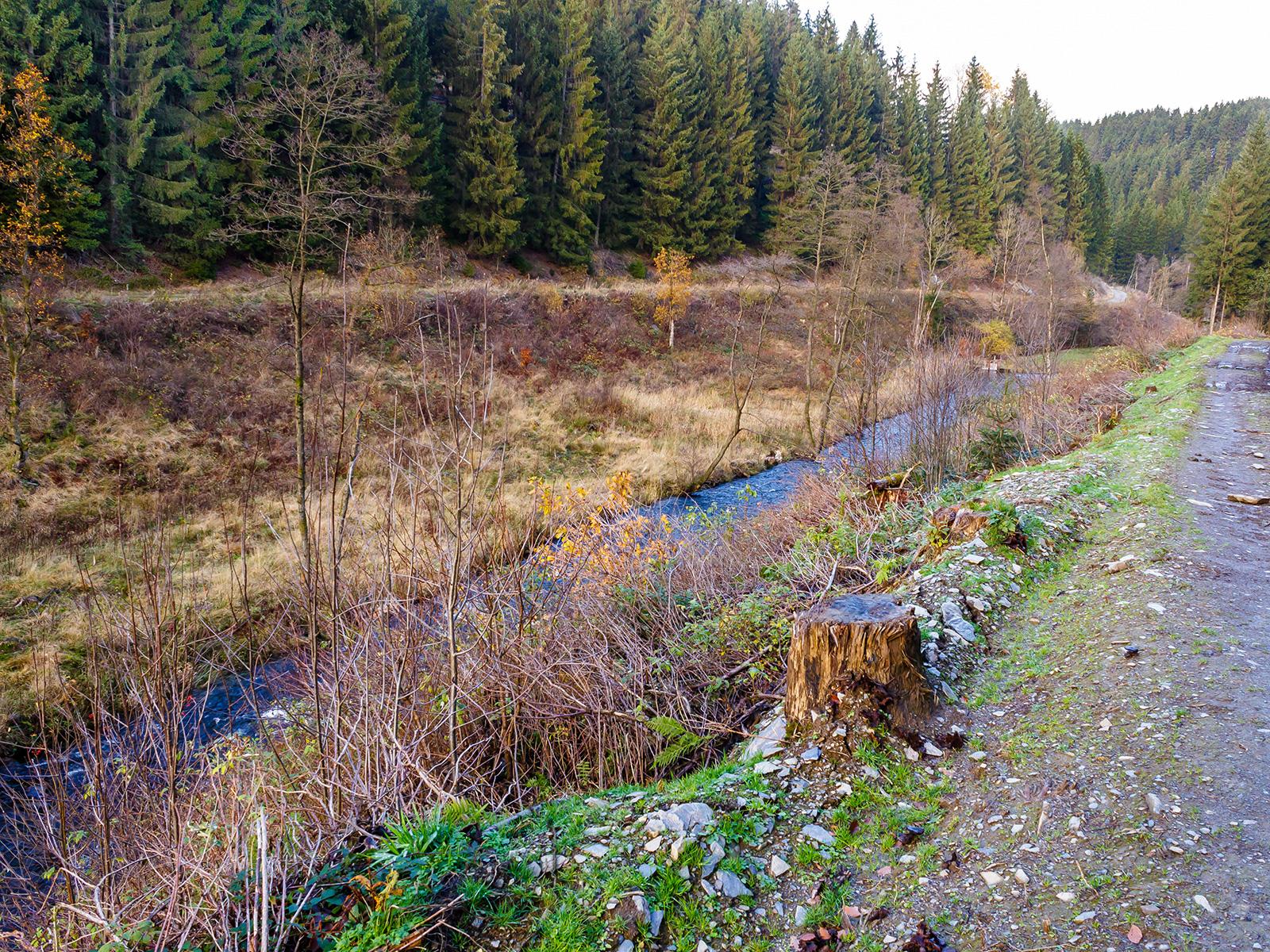 Ufer mit typischer Kahlschlagsflora