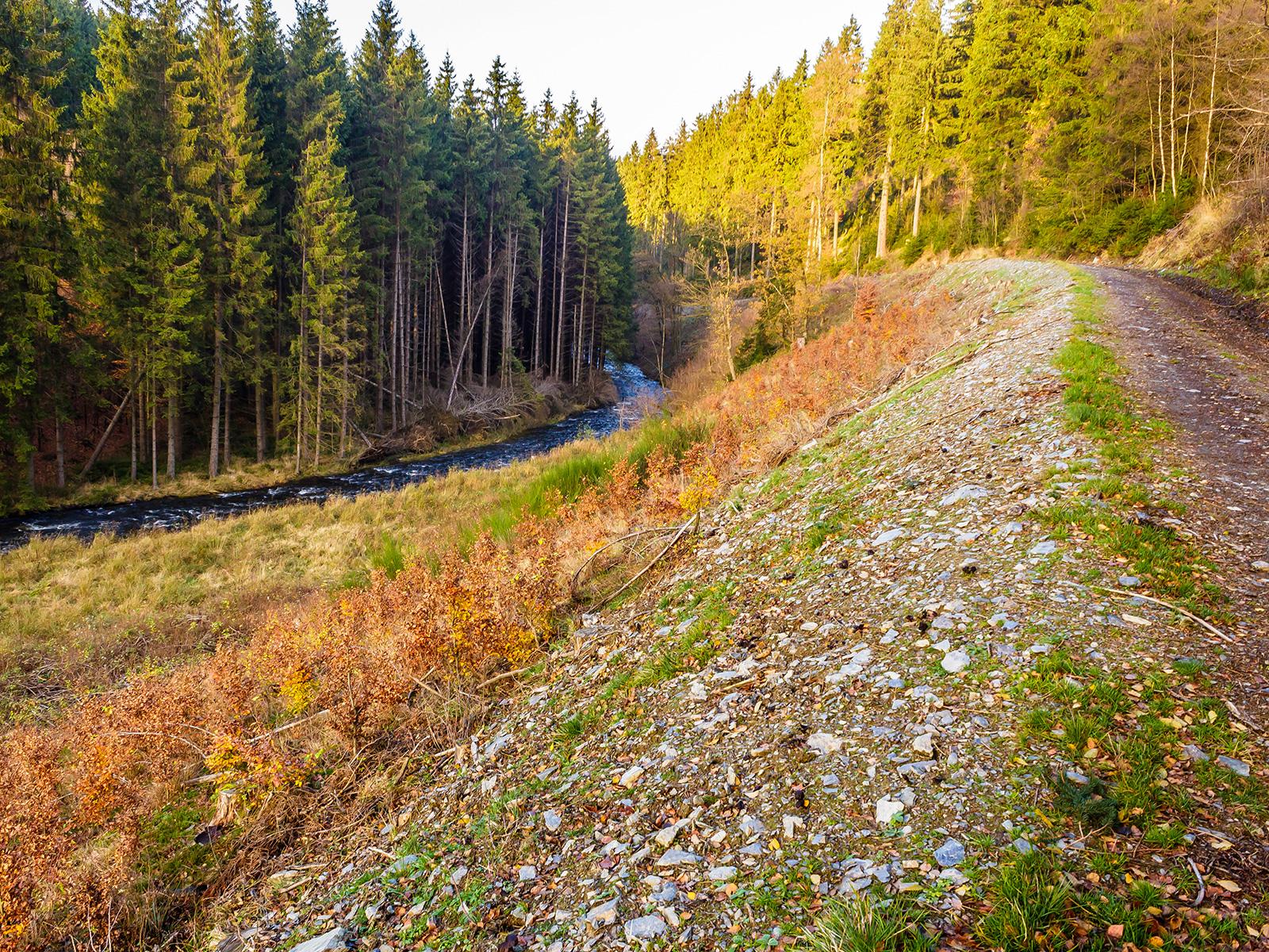 degradierter Boden am Forstweg