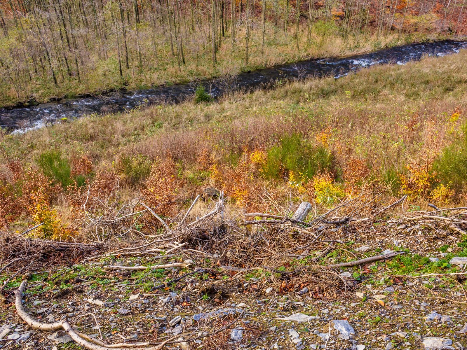künstlich angepflanzte Buchen auf degradiertem Boden