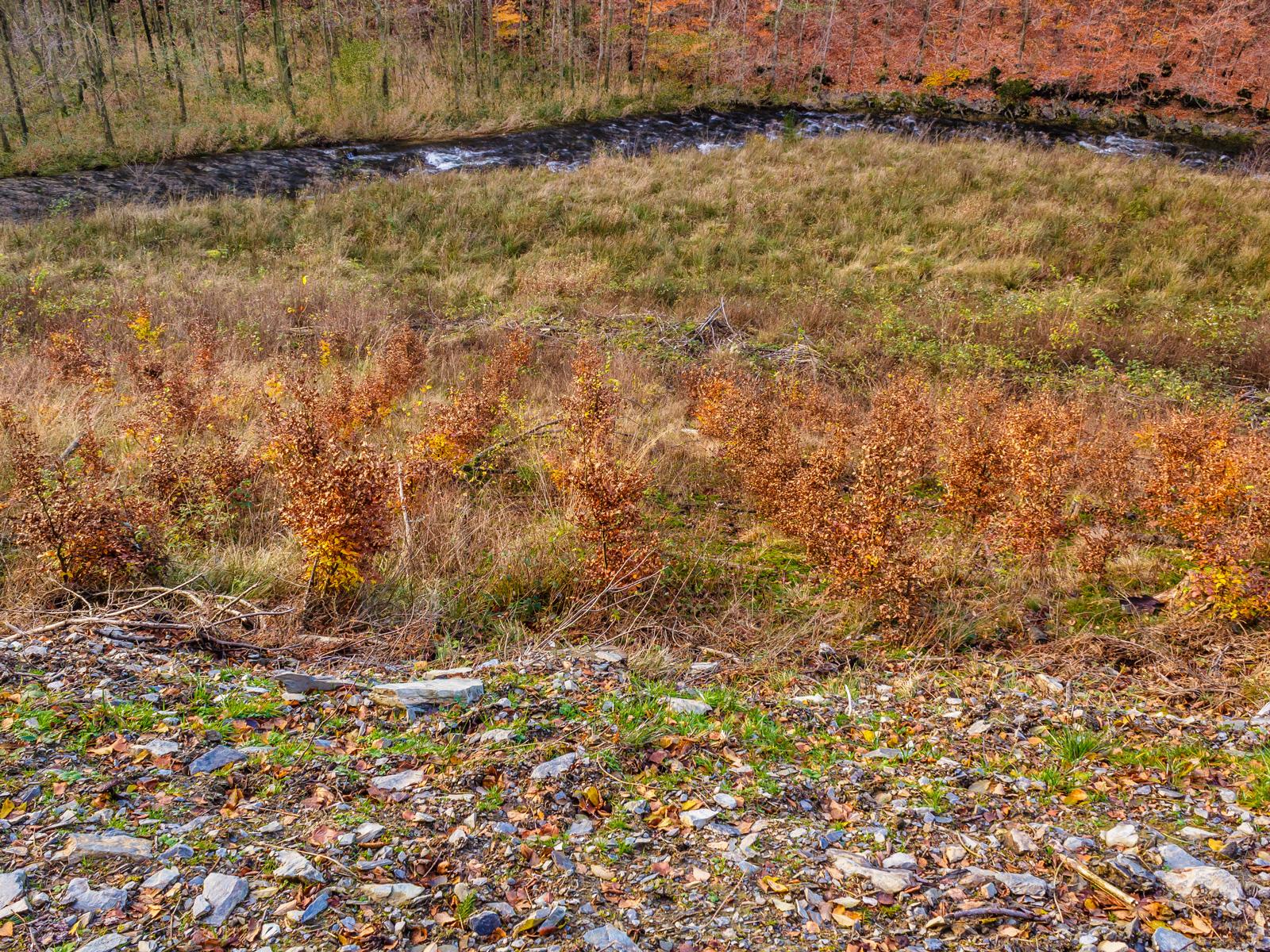 in Reih und Glied gepflanzte Buchensetzlinge