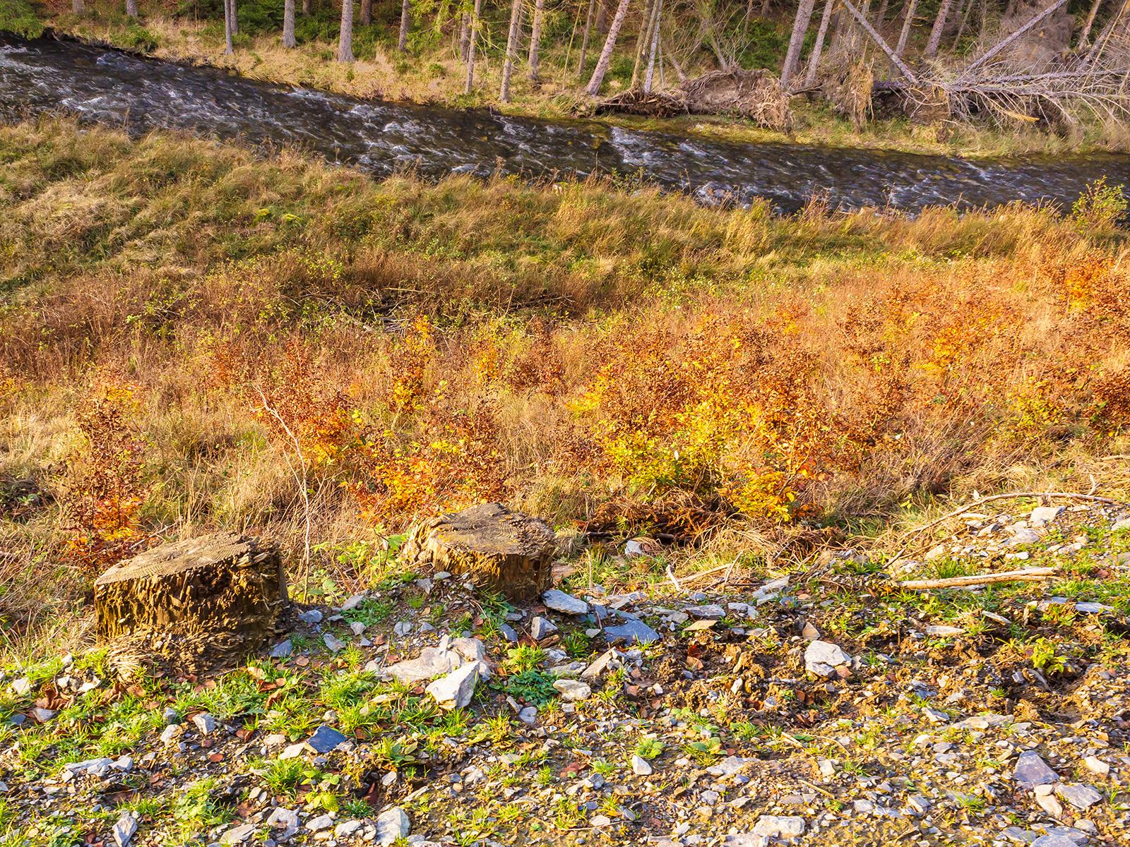 Buchensetzlinge inmitten hoher Gräser
