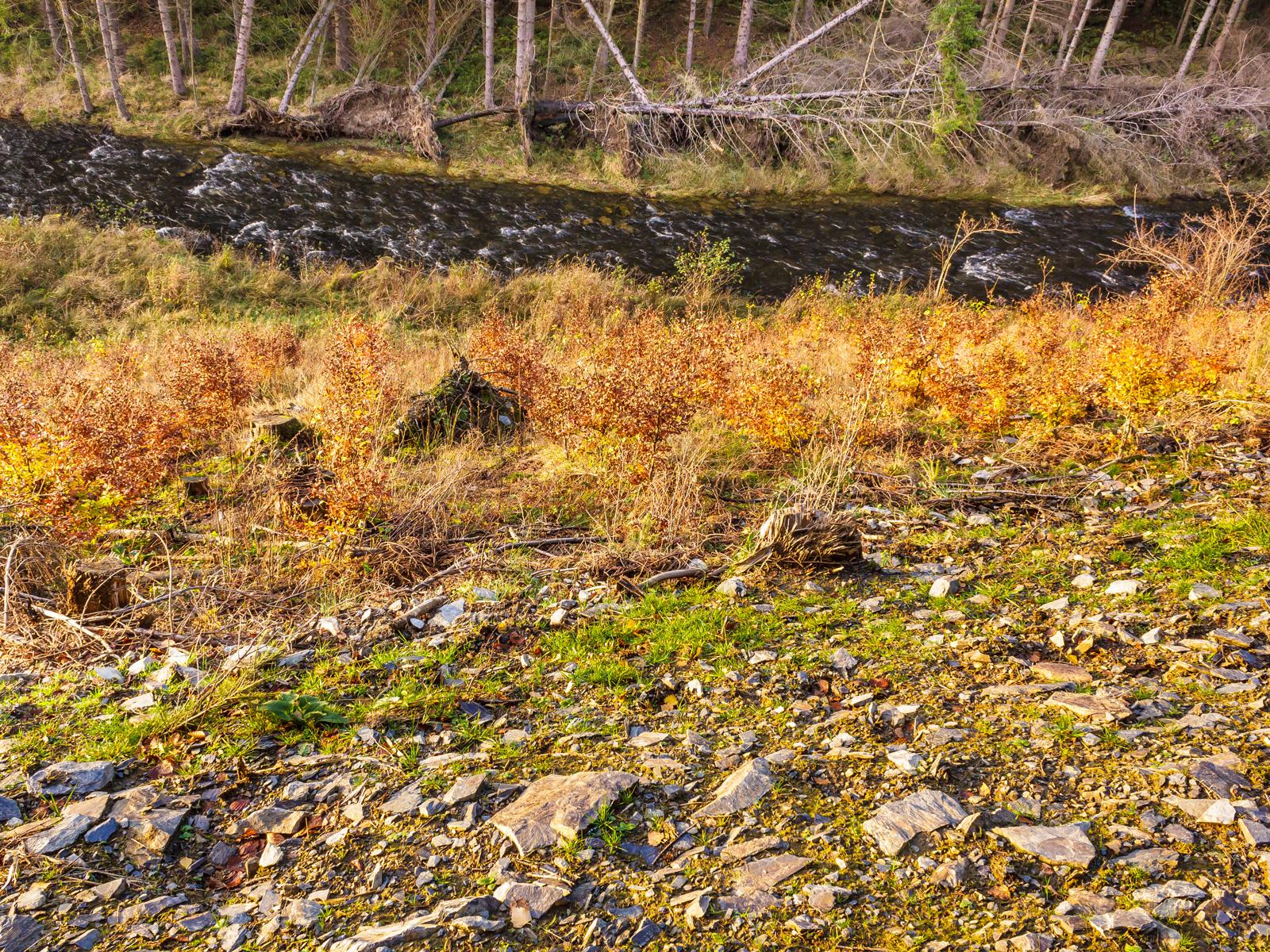 """humuslose Gesteinswüsten - im Hintergrund natürliche """"Entfichtungen"""" durch Windwurf"""