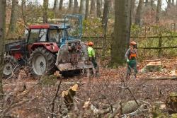 3 Waldarbeiter (Gesichter wurden unkenntlich gemacht)