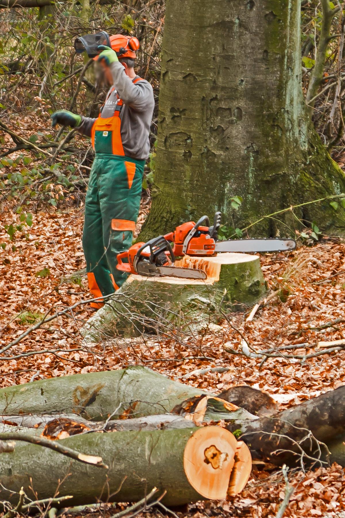 Waldarbeiter der Firma Baumgartner