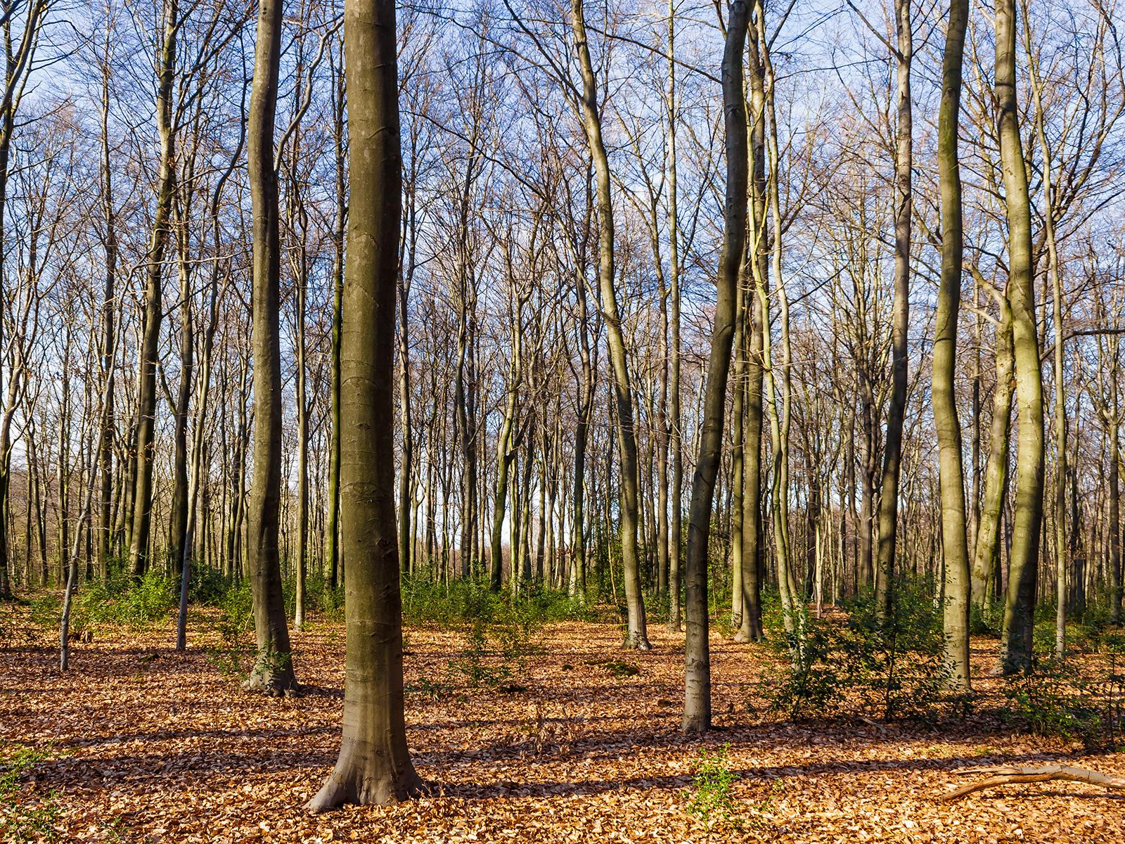Altersklasse: Baumholz