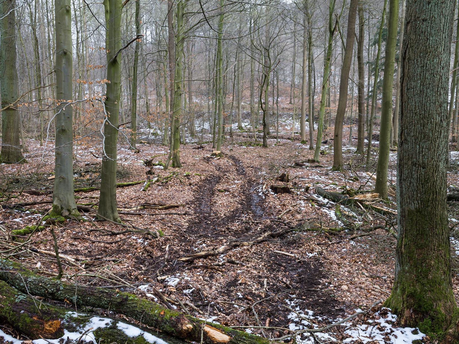 Weg quer durch den Wald zu einem Baumstumpf