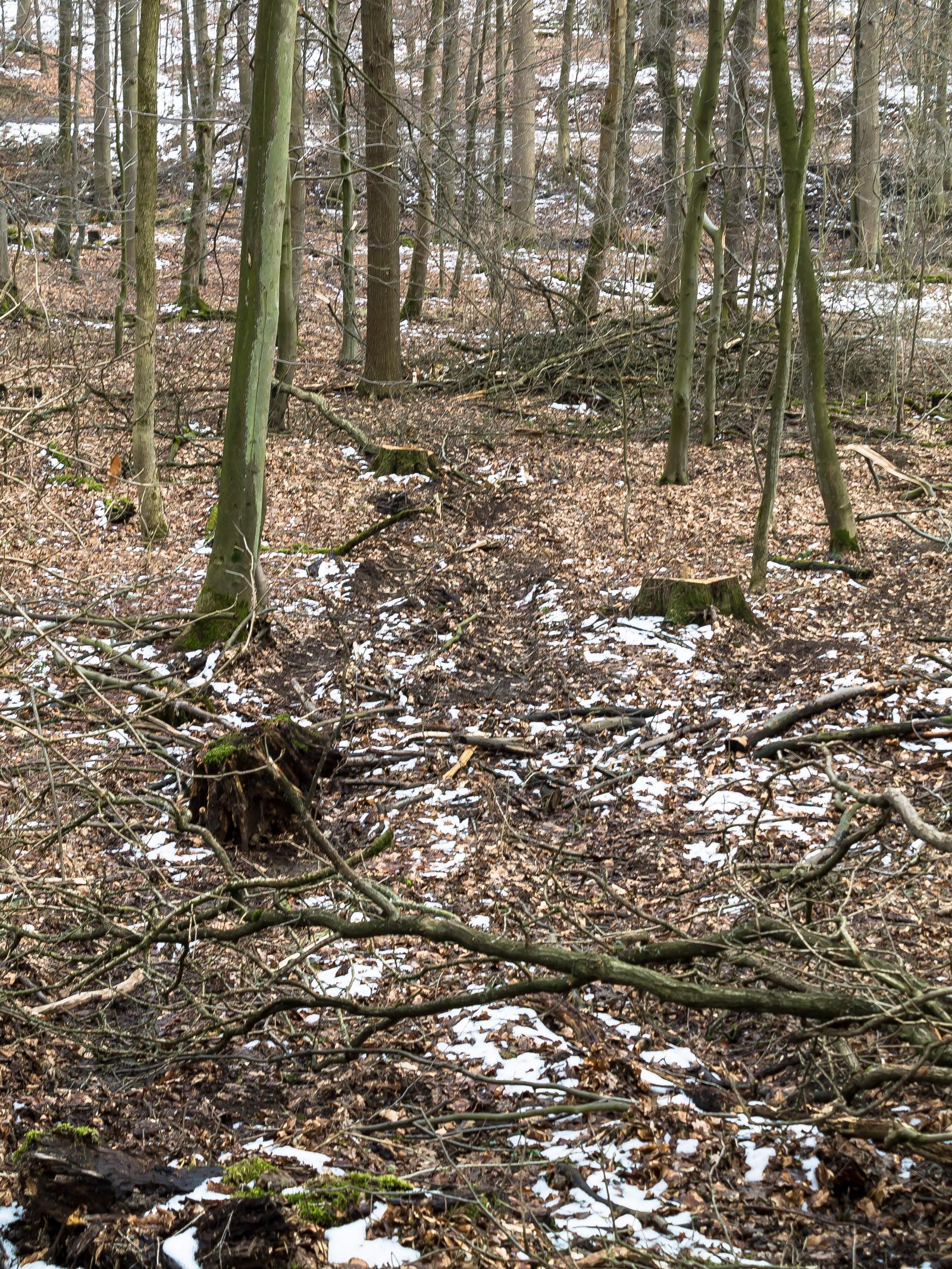 Weg quer durch den Wald zu 2 Baumstümpfen