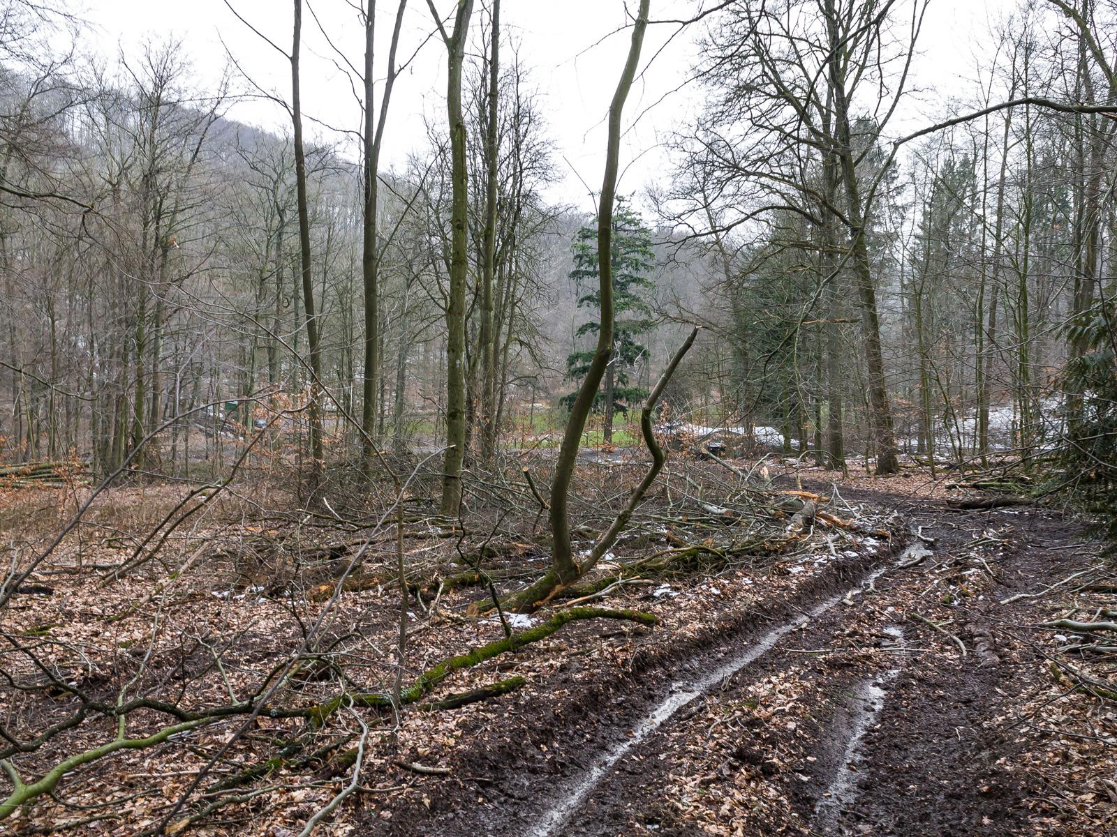Forstweg mit tiefen Bodengleisen
