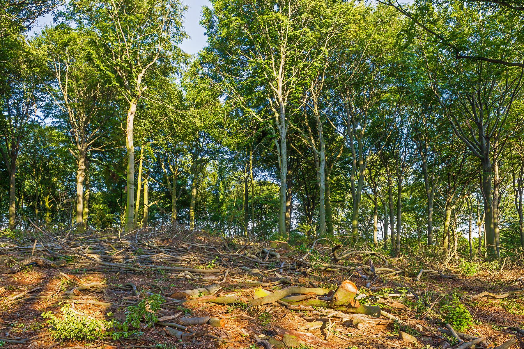 """""""Abholzung nicht aus Profitgier"""""""
