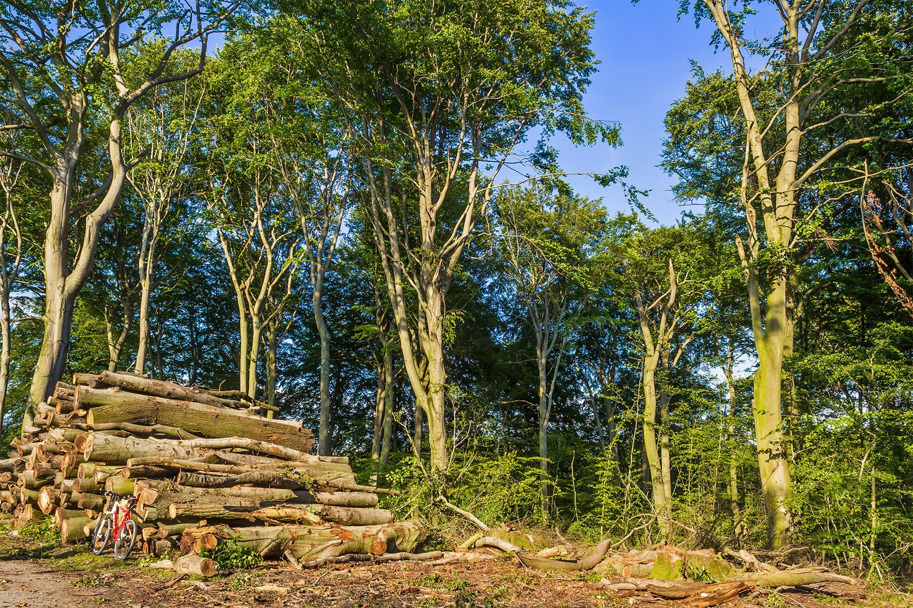 """""""Schutz des Waldes an erster Stelle"""""""