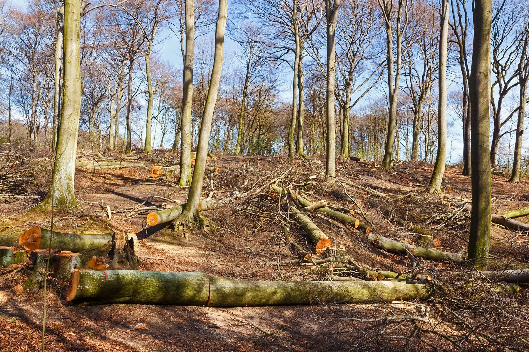 """""""notwendige Maßnahme im Sinne der ordnungsgemäßen Forstwirtschaft"""""""