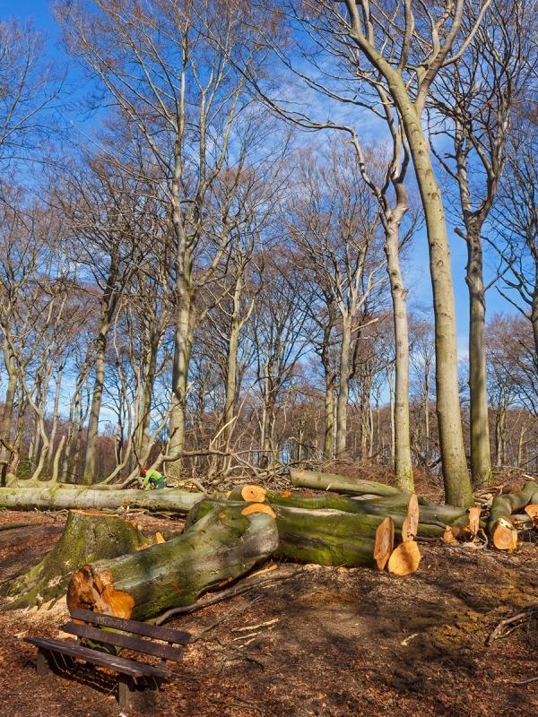 """""""Prinzipien der ordnungsgemäßen Forstwirtschaft eingehalten"""""""