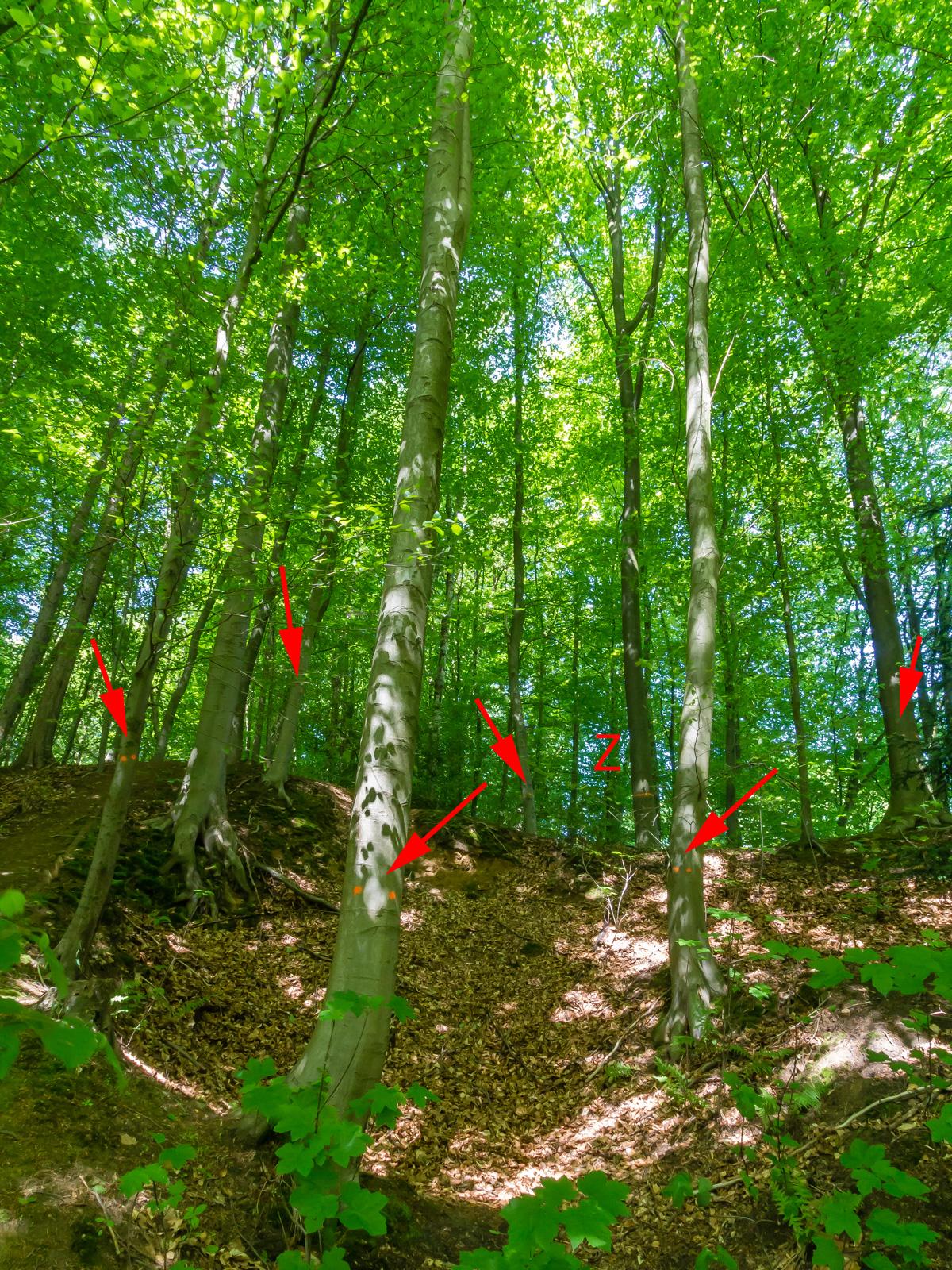 Z-Baum mit Z markiert