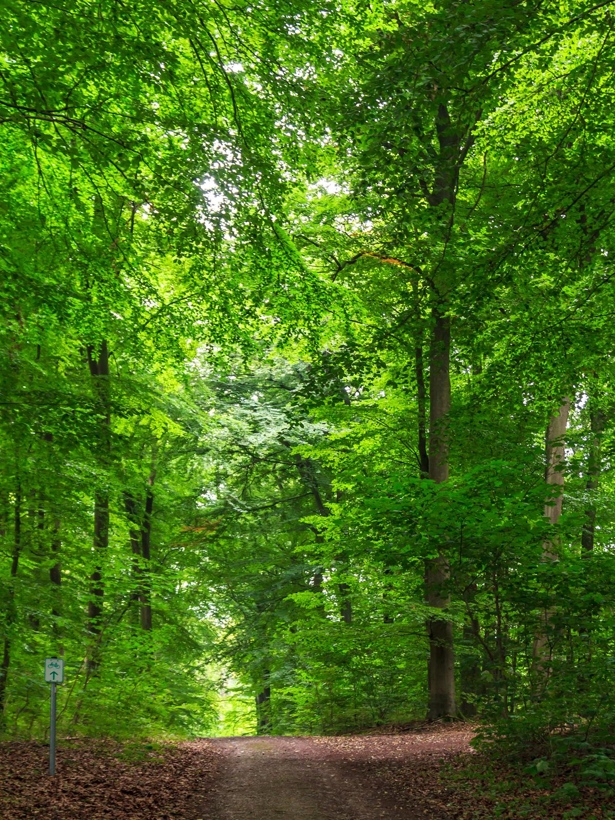 Fahrradweg durch den Behlendorfer Forst