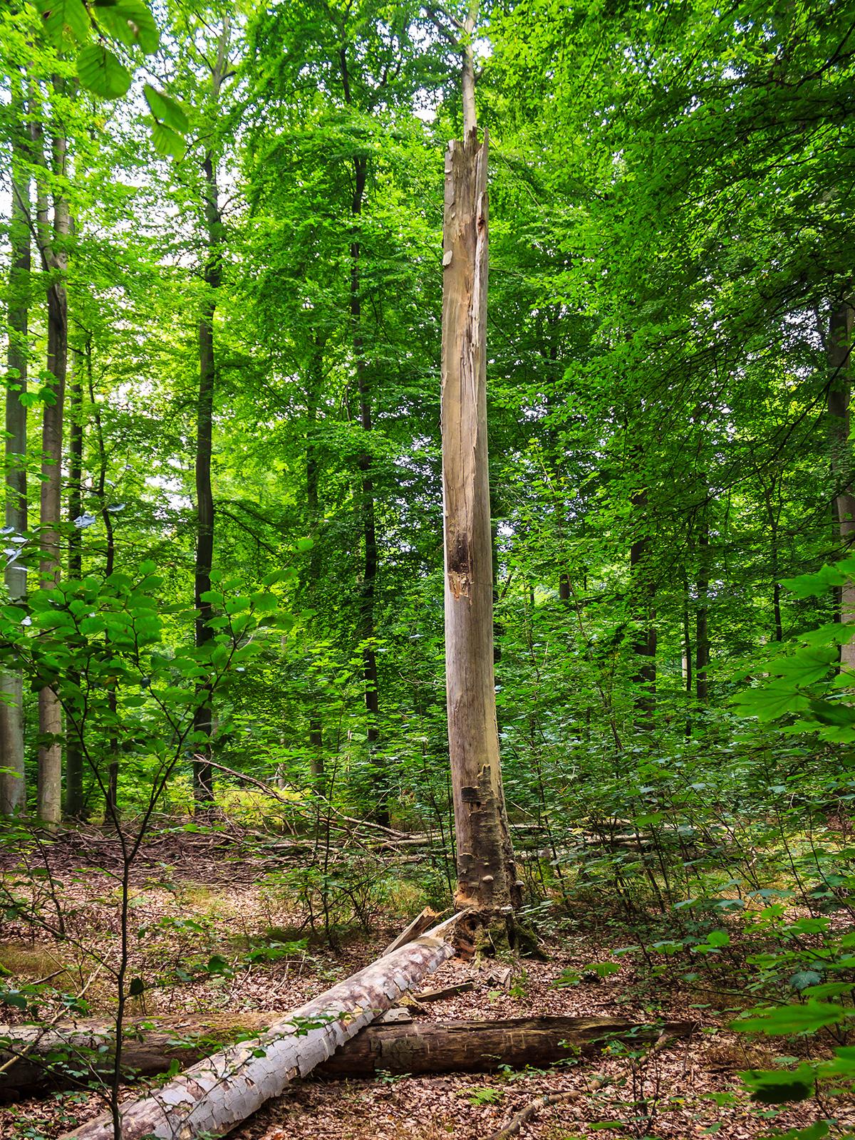 stehendes und liegendes Totholz