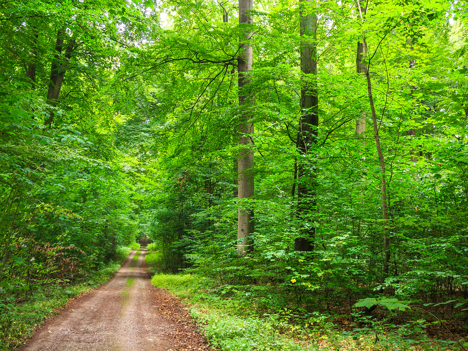 Weg im Behlendorfer Forst