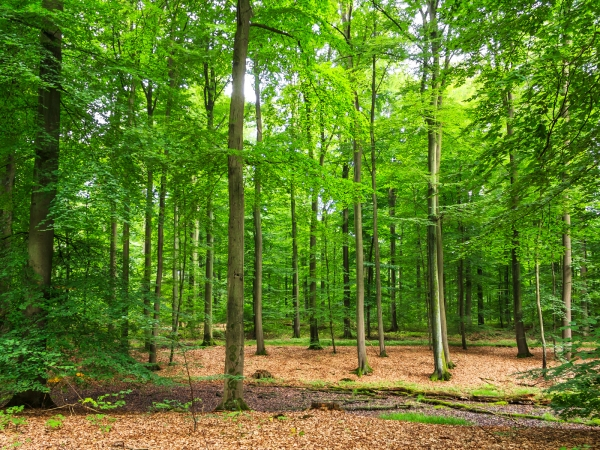 ausgetrockneter Tümpel im Behlendorfer Forst
