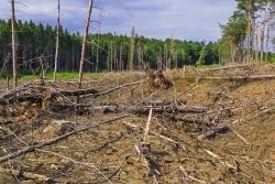 fast vollständig von Totholz geräumter Kahlschlag