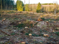 verwundeter und verdichteter Waldboden
