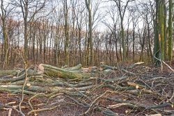 Umwandlung von Habitatbäumen in Abfallholz
