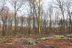 Schneisen der Verwüstung ziehen sich durch den Wald
