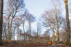 kein Wald mehr, sondern lose Ansammlung von Einzelbäumen