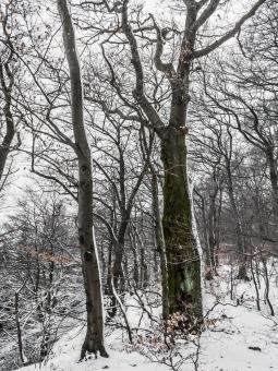 Biotopbaum