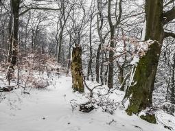 schmaler Streifen mit Biotopbäumen