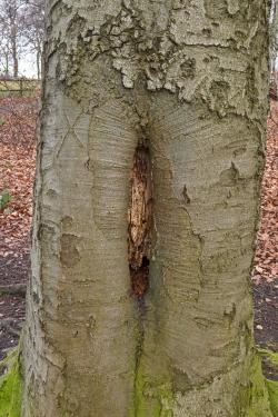 offene Großhöhle mit Käfereinbohrlöchern