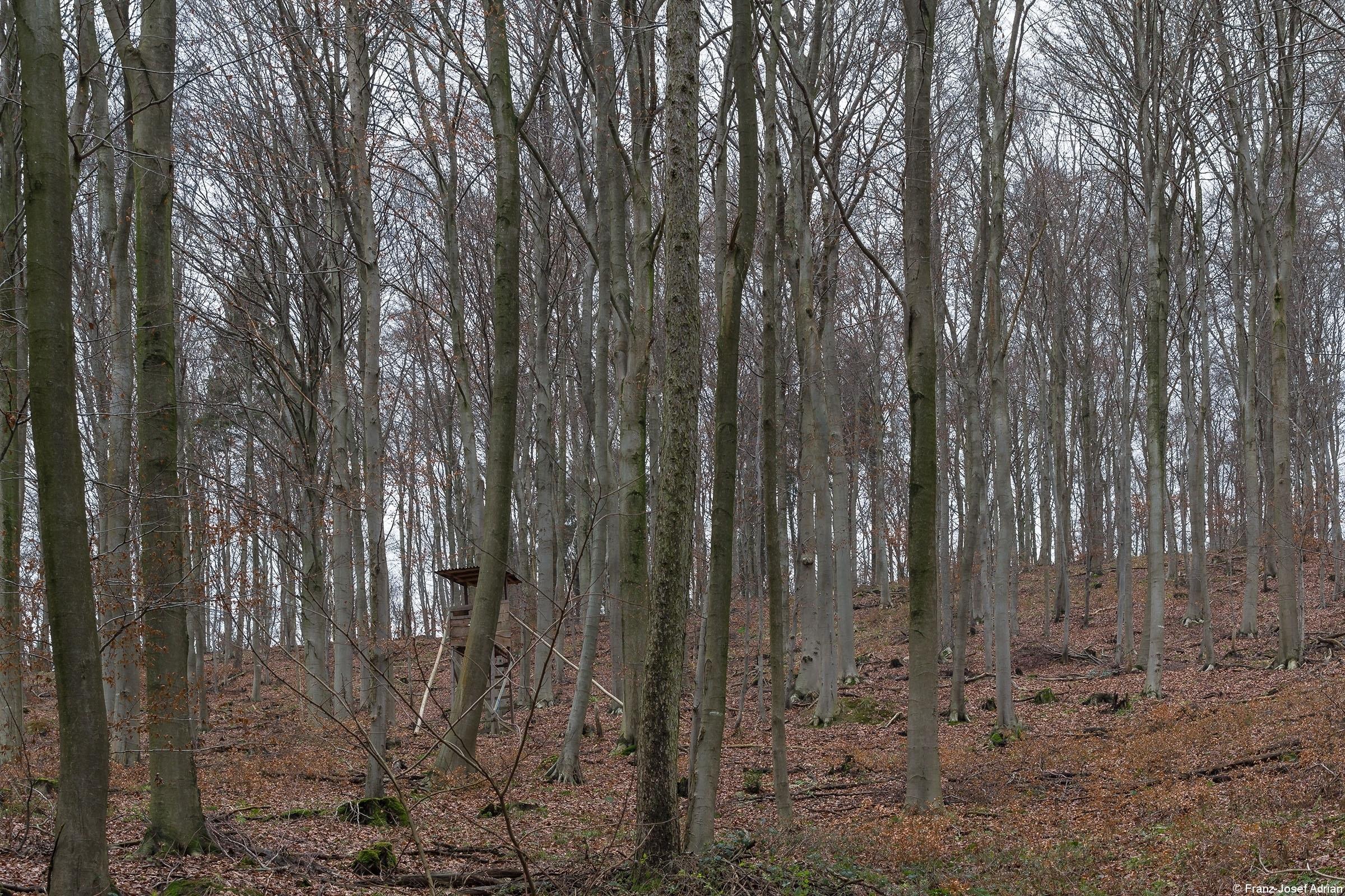 Biotopbaum_Porta_Westfalica_10