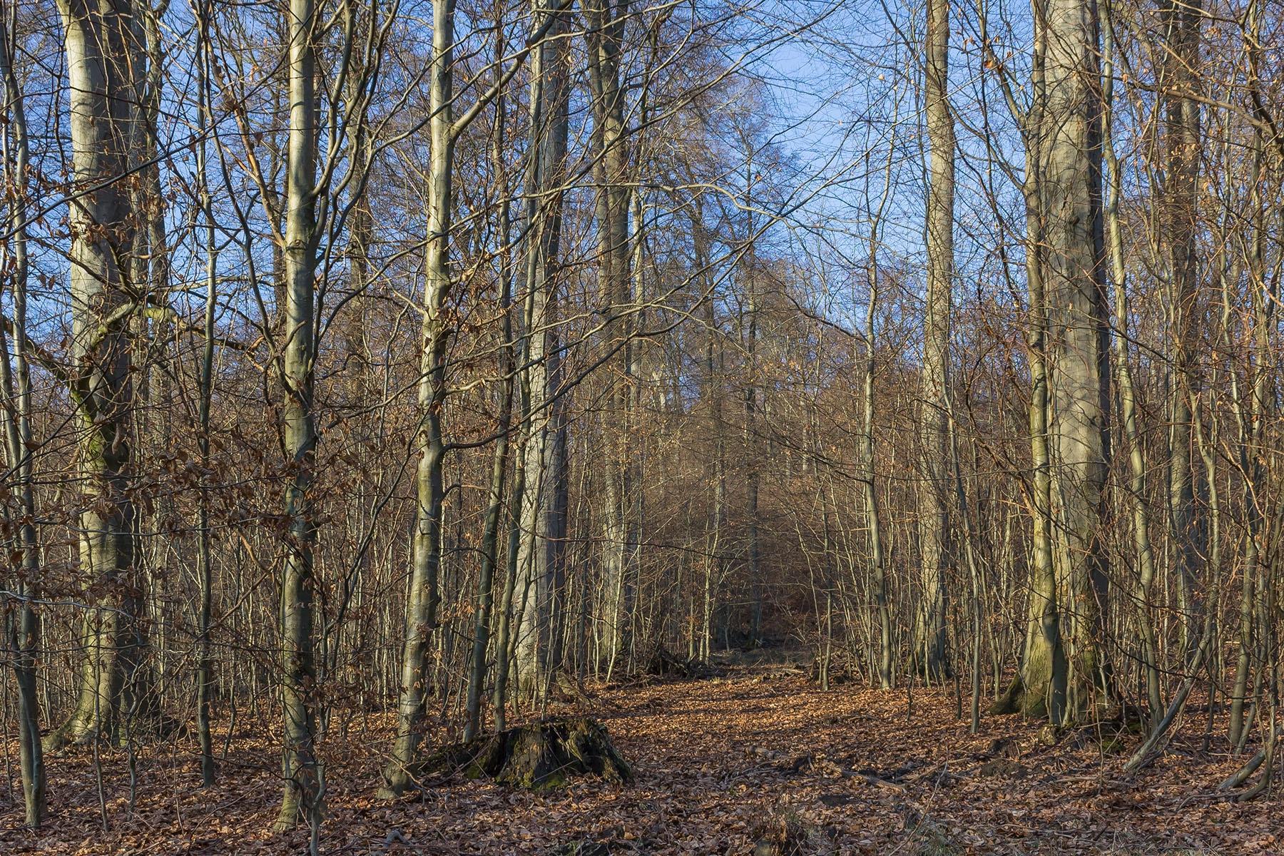 Biotopbaum_Porta_Westfalica_2a