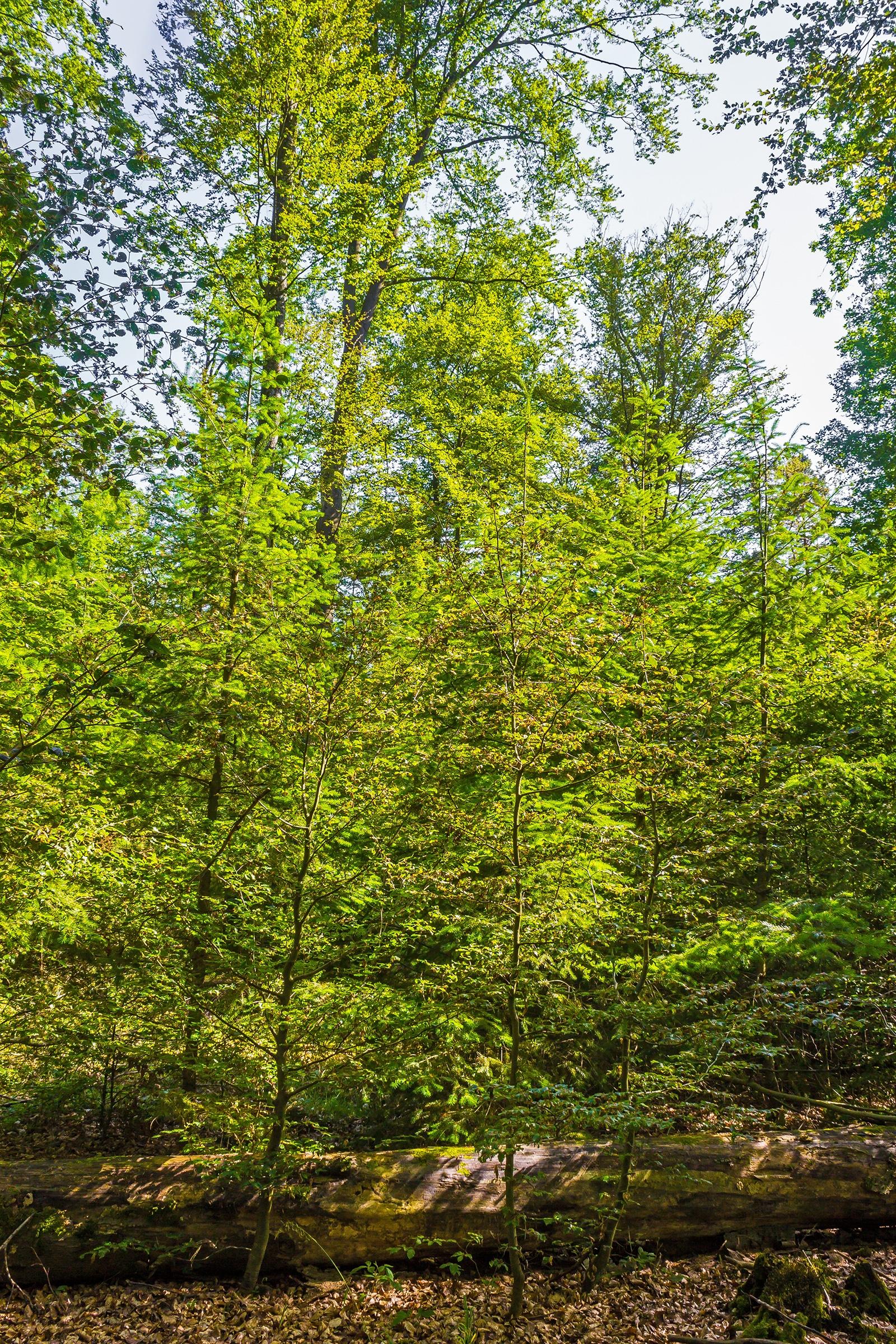 Försterwald östlich von Fabrikschleichach