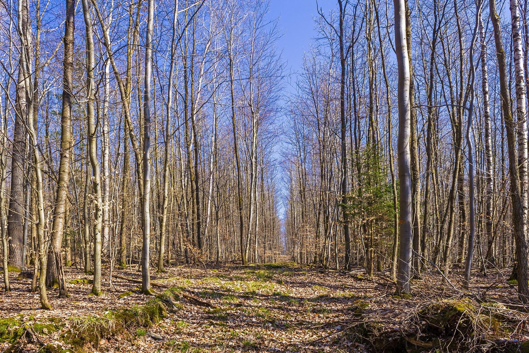 Stangenforst in der Waldabteilung Brunnstube