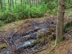tiefe Bodengleise in der Rückegasse