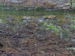 tiefe Rinnen im Auenboden durch Baumrücken