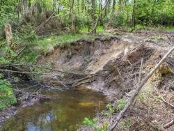 durch Holzrücken beschädigte Ufersteilkante