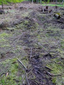 Rückespuren, oberste Bodenschicht zerstört
