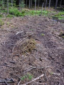 """trotz """"Reisigbett"""" wird der Boden verdichtet"""