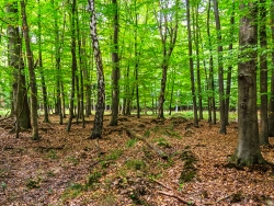 tiefe Bodengleise im Wald, im Hintergrund die Lichtung