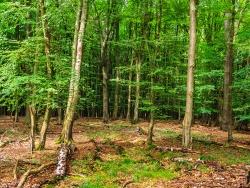 tiefe Wunden im Waldboden