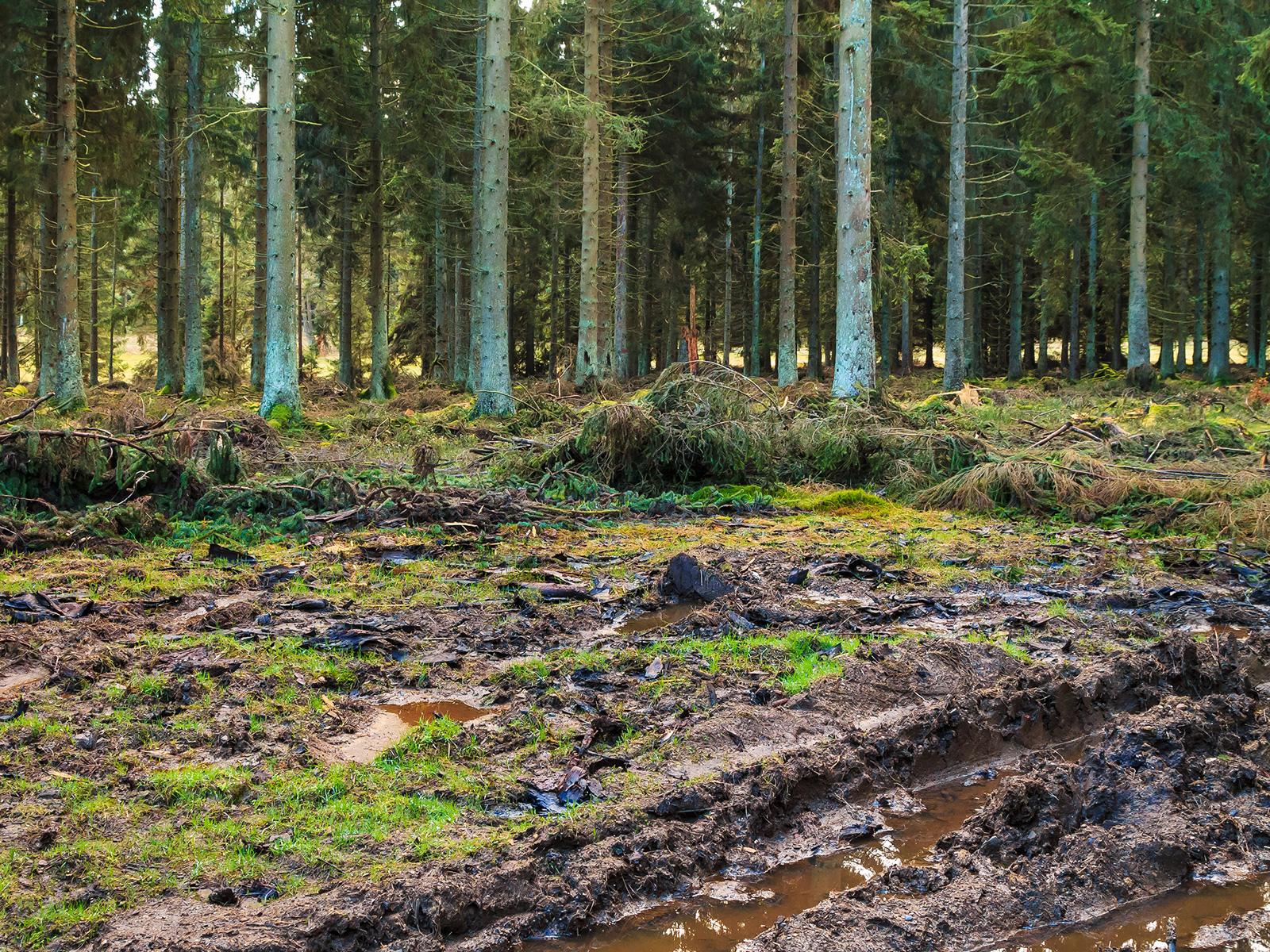 Pfützen auf dem verdichteten Waldboden