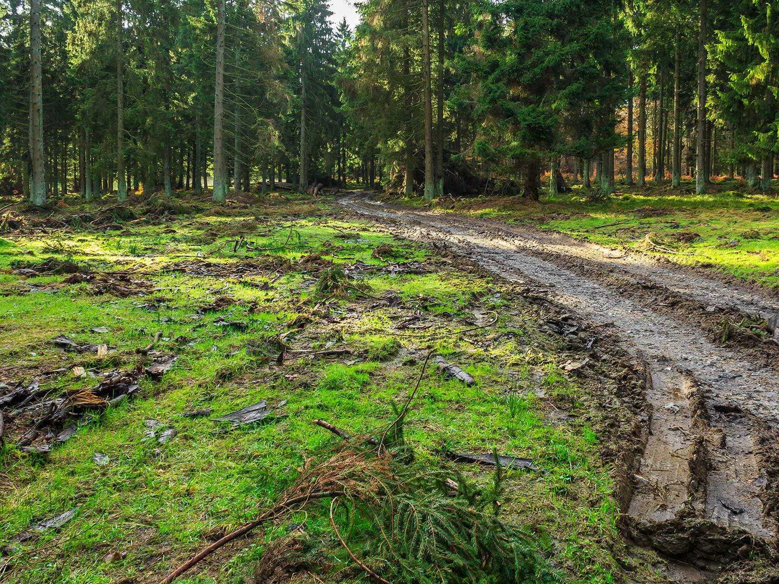 Fahr- und Rückespuren auf dem Waldboden