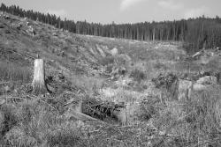 Erosion am baumlosen Ilsehang
